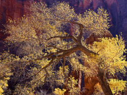 INDIAN SUMMER ZION