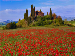TUSCAN POPPIES, VAL D ORCHIA