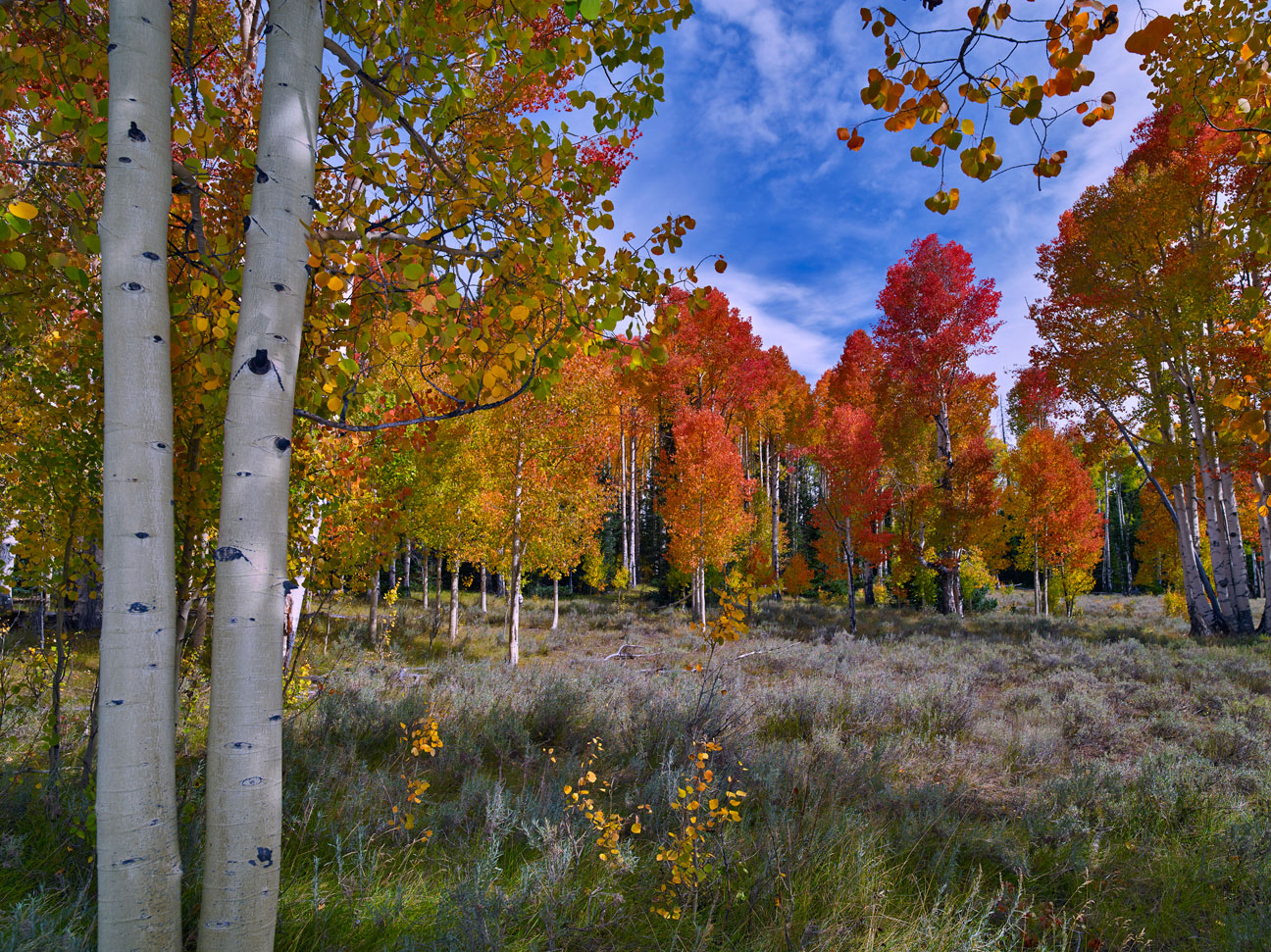 ASPENS OF GLORY