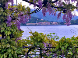 BELLAGIO WISTERIA, LAKE COMO, ITALY