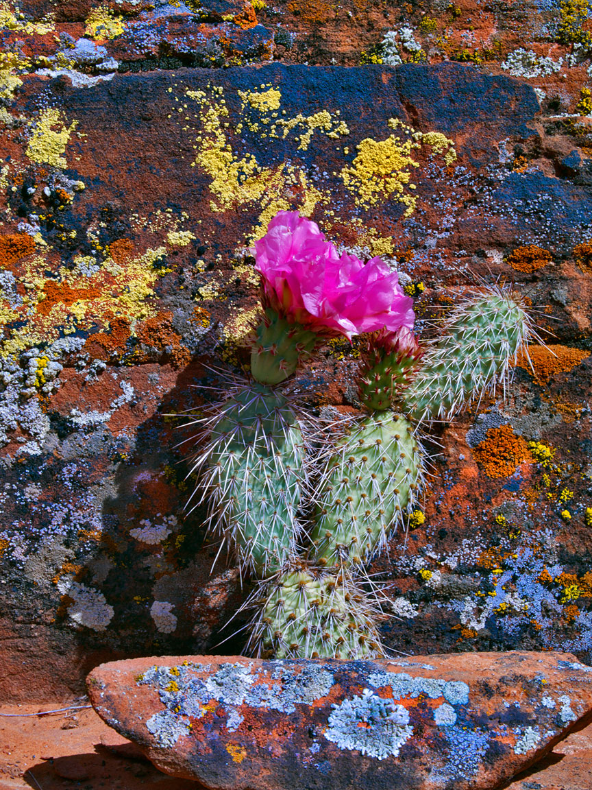 LICHEN AND CACTUS