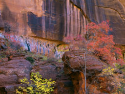 SUMMER LEAVES ZION