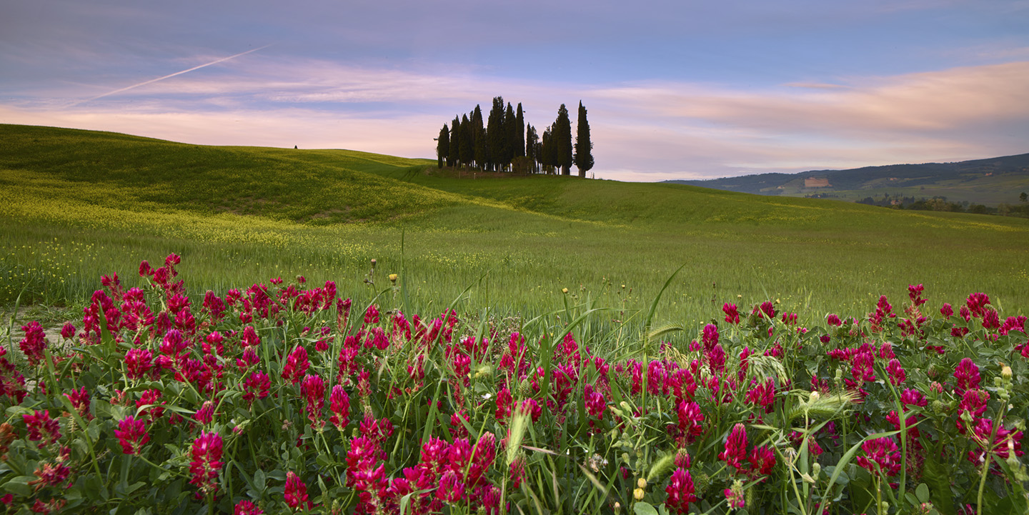 CYPRESS DREAM, VAL D' ORCHIA, TUSCANY